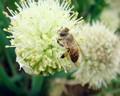Miel de trigo sarraceno personalizado/oem/compra