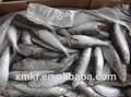 sardina pescado nombre científico