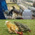 Anping jaula del pollo de malla para la venta( fábrica)