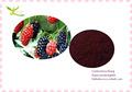 100% natural de alta calidad de morera extracto de fruta con 5%, 10%, 15%, 20%, 25% antocianinas