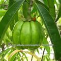 Extracto de Garcinia cambogia