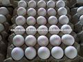 blanco mesa de proveedores de huevo