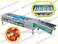 La limpieza y clasificación de la máquina/frutas/de tomate máquina de clasificación por peso