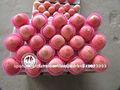 China roja manzanas precio