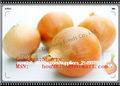 2013 cebolla FRESCA, wonion fresco del yello