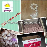 New crop natural DUBAI market shandong garlic