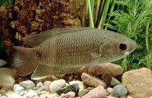 Tropical Fish, Aquatic Plants, Live Birds