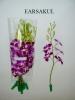 Fresh Cut Orchid Flowers
