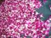 Sonia Fresh Cut Orchid Flower Head