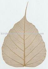 Bo Skeleton Leaves