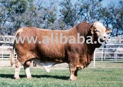 Kosher, Glatt Kosher, Halal, US Premium Beef