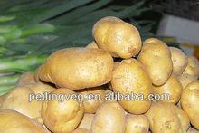 Chinese Fresh potato (processing factory)