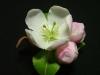 Apple Blossoms Hairgrips
