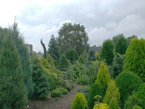 Piante ornamentali da giardino, conifere e cespugli