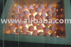 Solar Poulty Incubator