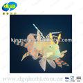 2013 nuevo diseño pescados del ornamento para fish tanque o de acuario