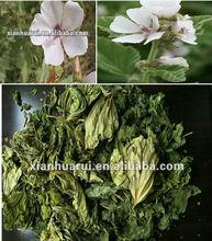 herb marshmallow leaf