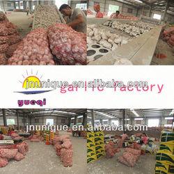 fresh 2013 hot sale supplier new harvest garlic