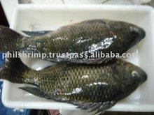 Philippines Fish