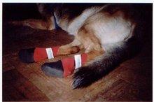 Dog Neoprene Boots