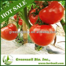 Hot Sale hybrid tomato seeds