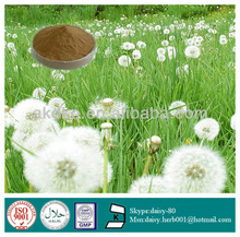 GMP 100% Natural plant extract mongolian dandelion herb extract