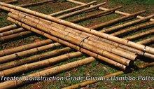 Treated Construction Grade Guadua Bamboo poles