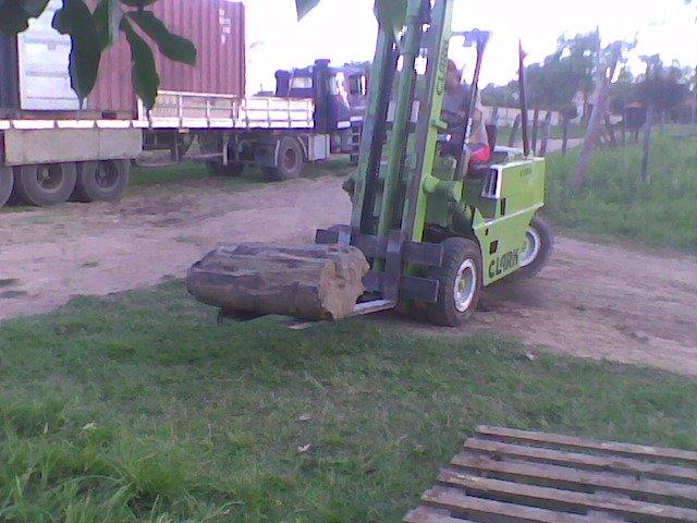 madera petrificada
