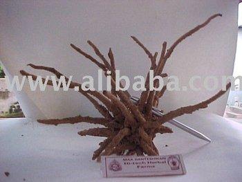 Indian medicinal herbs