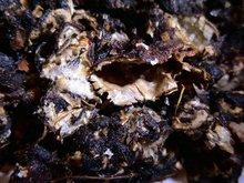Tamarind (Seedless)