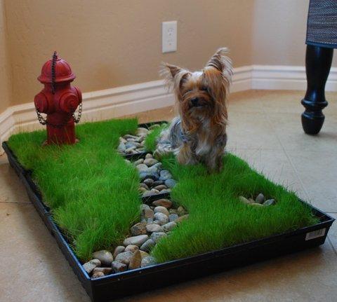 Potty training puppy on fake grass 2014