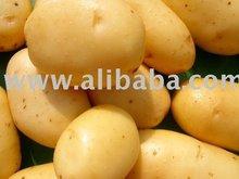 Fresh yellow skin potatoes