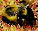 natural bee honey
