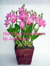 "Handmade Clay Flower "" Cataleeya Gold Sport"""