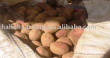 Holland Export White and Yellow Potatoes Industrial use