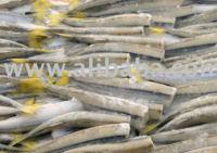 Silver Smelt HG (Odonthestes regia)