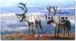 Deer meat, venison.