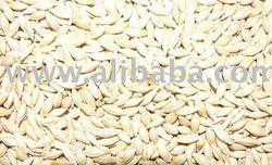 Australian malt barley