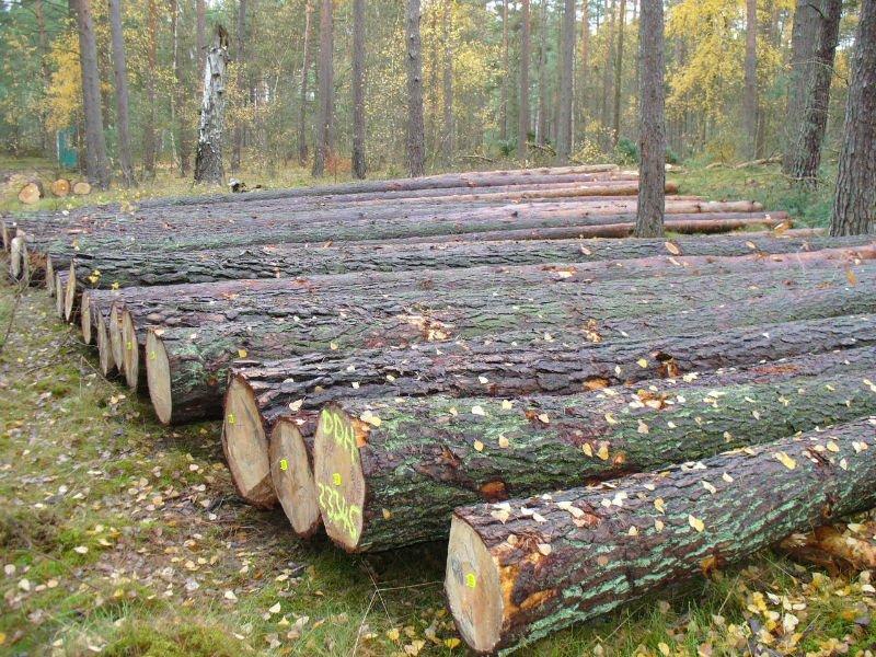 Russian Red Pine Logs Buy Pine Wood Logs Veneer Log Pine