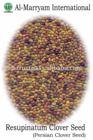 Resupinatum Clover Seed