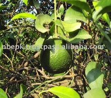 Citrus Fruit from Pakistan