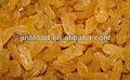 Niza delicioso xinjiang pasas de oro alta calidad