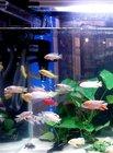 Tropical Ornamental Fish, Plant and Aquarium (www.maramaquatic.com)