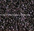Prémio de qualidade de sementes de gergelim para venda