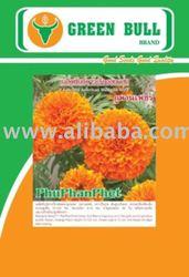 hat giong hoa cuc van tho PhuPhanPhet marigold seed
