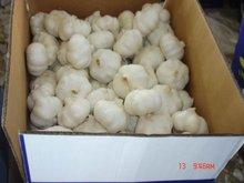 2013 new natural garlic