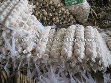 snow white natural braid garlic for sale