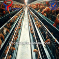 la capa de pollo para pollos de engorde