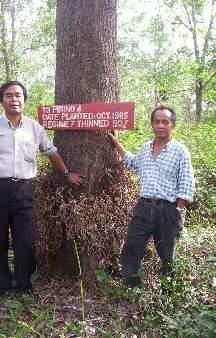 Acacia Mangium Super Round Log