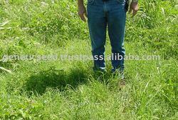 SUNGRAZER PLUS Bermuda Grass Seed